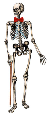 skeleton with cane and bow tie